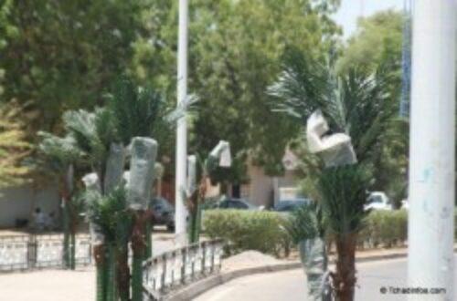 Article : Ndjamena : une ville 100 % bio… ou presque